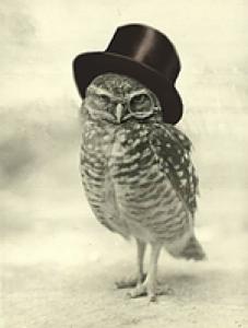 The Owl Pub