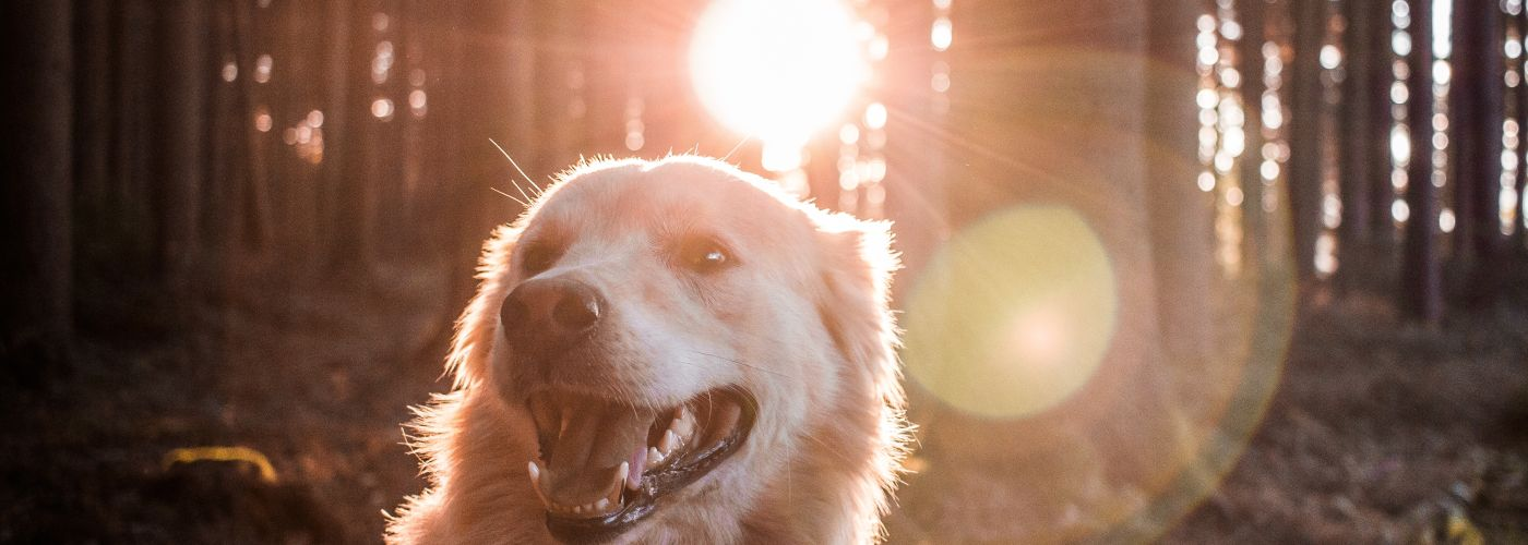 dog friendly places in Osoyoos photo by andreas wagner