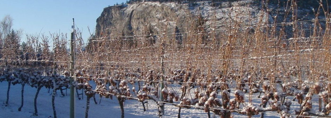 Winter Winery Hours 2019