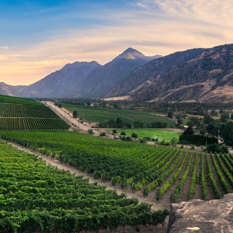 Vanessa Vineyard and winery