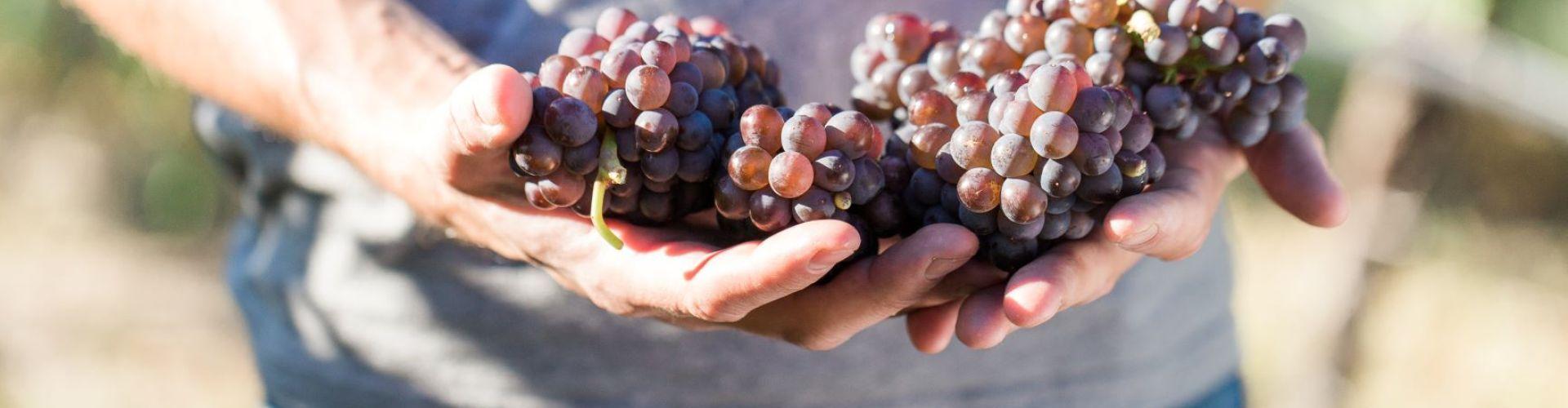 fall wine festival weekend in osoyoos