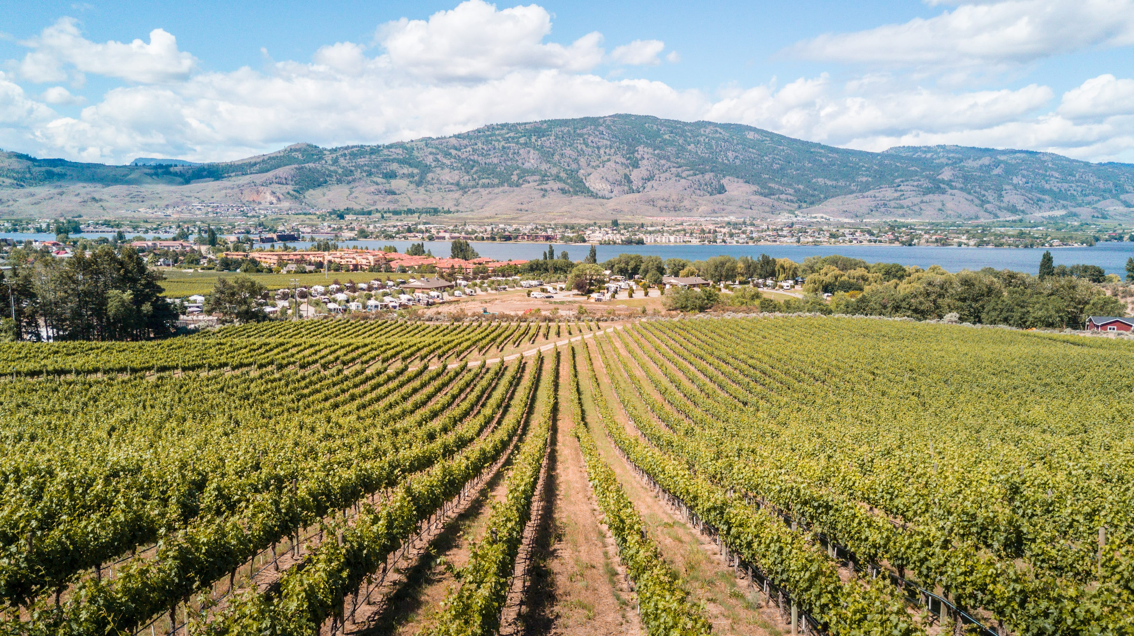 Vineyard view with Osoyoos Lake in the distance